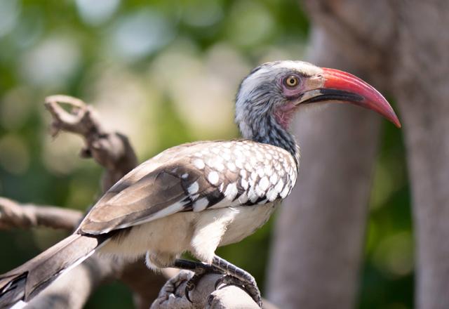 Afrikanischer Vogel Afrika