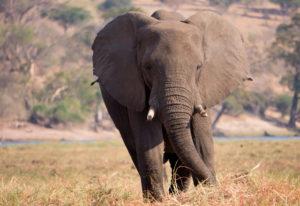 Wüstenelefanten, Spitzmaulnashörner & Ovahimbas