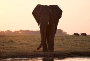 Afrikas Tierwelten