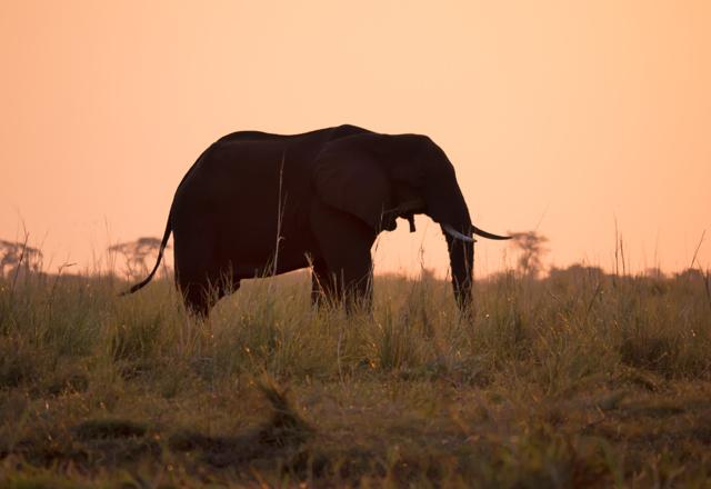 Afrikas Elefanten