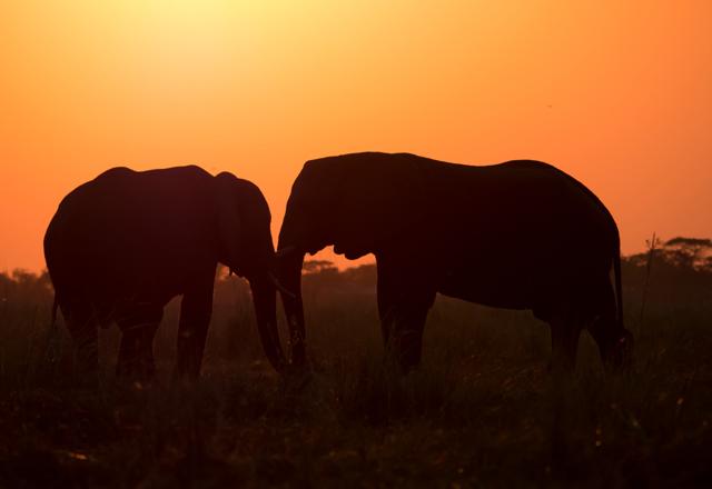 Afrikas Tierwelten erleben