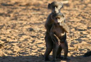 Herrliche Wüsten Namibias